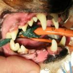 Nach der Zahnsteinentfernung - Hund Zahnstein 8